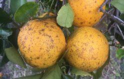 ADELAIDE PARK –  IRRIGATION FARM | Rod Harms Rural