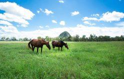 Springton Park Spelling Farm & Equine Complex | Rod Harms Rural