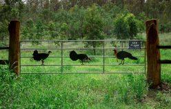 LOT 8, Struck Oil Road | Rod Harms Rural