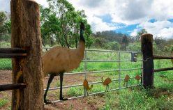 LOT 3, Struck Oil Road | Rod Harms Rural