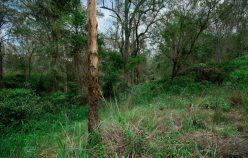 LOT 1, Struck Oil Road | Rod Harms Rural